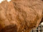 Болест квргаве коже код говеда