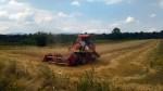 Жетва пшенице на пољима у општини Бојник у пуном је јеку